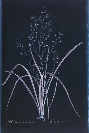 Lucent - Ramosum-Chris Dunker-Giclee Print