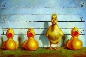 The Big Lineup by Lucia Heffernan