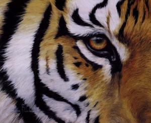 Eye of the Tiger by Lucie Bilodeau