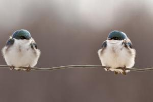 Birds on a Wire by Lucie Gagnon