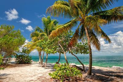 Palm Beach. Palm Trees on a Beach, Caribbean Sea