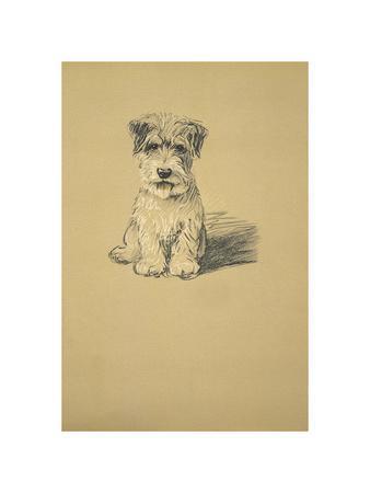 Binkie, Sealyham Terrier