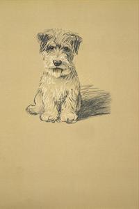 Binkie, Sealyham Terrier by Lucy Dawson