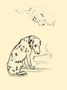 Blot The Dalmation by Lucy Dawson