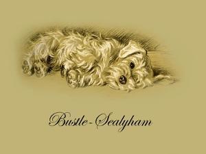 Bustle The Sealyham by Lucy Dawson