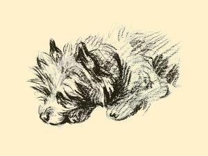 Cairn Terrier by Lucy Dawson