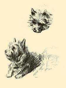 Daria The Cairn Terrier by Lucy Dawson