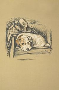 Denna, Sealyham Terrier by Lucy Dawson