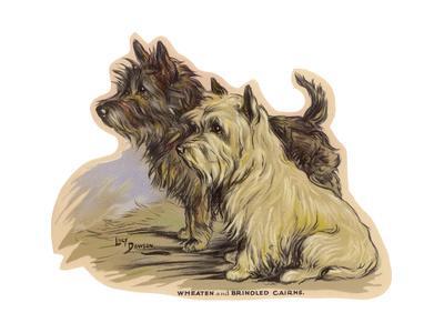 Dogs, Cairns, Dawson