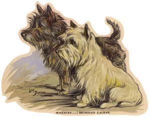 Dogs, Cairns, Dawson by Lucy Dawson