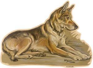Dogs, German Shepherd, Dawson by Lucy Dawson