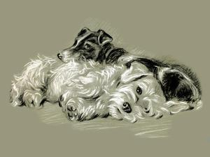Dogs Rough & Smooth by Lucy Dawson