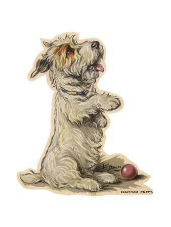 Dogs, Sealyham, Dawson