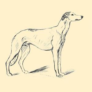 Flaxman The Greyhound by Lucy Dawson