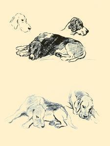 Fox Hounds by Lucy Dawson
