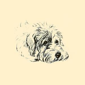 Godfrey by Lucy Dawson