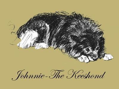 Johnnie-The Keeshond