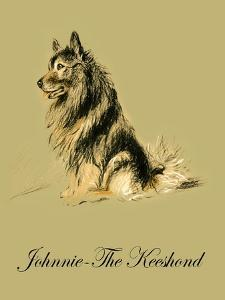 Johnnie The Keeshond by Lucy Dawson