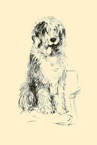 Peter The Sheepdog by Lucy Dawson