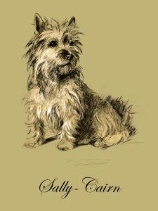 Sally The Cairn Terrier by Lucy Dawson
