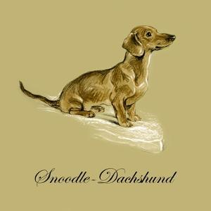 Snoodle The Daschund by Lucy Dawson