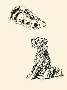 Taffy Has A Bone by Lucy Dawson