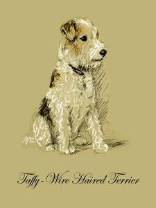 Taffy The Wire Haired Terrier by Lucy Dawson