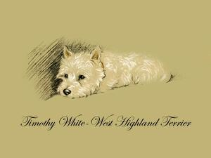 Timothy White-West Highland Terrier by Lucy Dawson