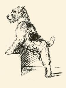 Wire Haired Terrier by Lucy Dawson