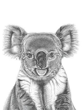 Koala Portrait