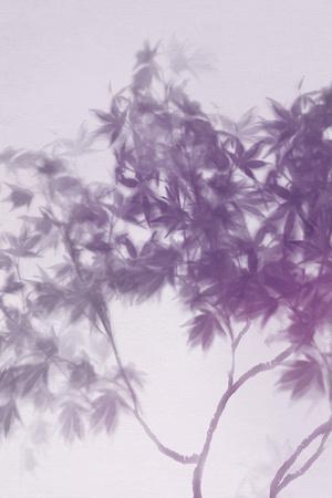 Misty Tree - Hush