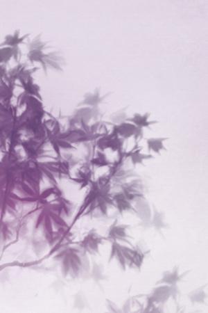 Misty Tree - Lull