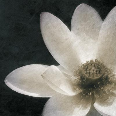 Moonlight Lily Pond II