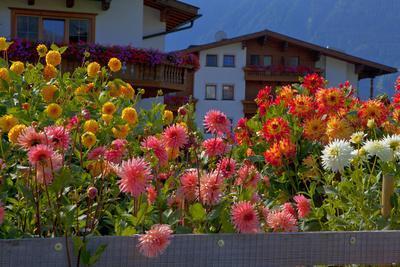 Flower-Garden with Dahlias