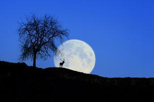 Red Deer with Moonrise (M) by Ludwig Mallaun