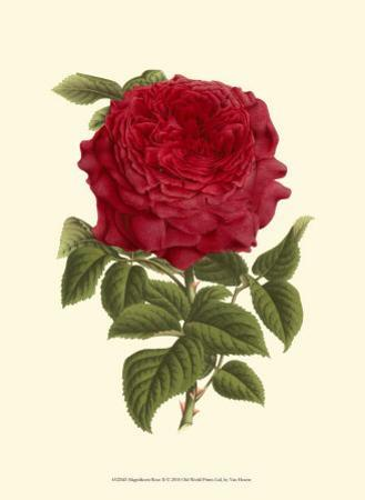 Magnificent Rose II by Ludwig Van Houtte