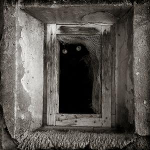 A Black Cat Inside a Window by Luis Beltran