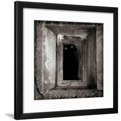 A Black Cat Inside a Window