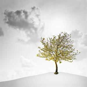 A Small Tree with Yellow Leaves on a White Background with Clouds by Luis Beltran