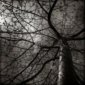 Looking Up at a Tree with Flowers by Luis Beltran