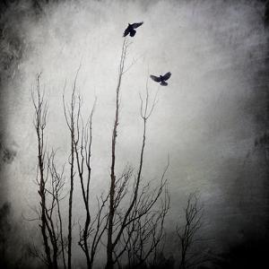 Two Bird Flying Near a Tree by Luis Beltran