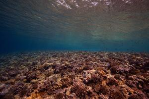 Coral, Fish, and Other Marine Life in an Atoll Off the Coast of Ponape Island by Luis Lamar