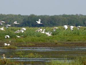 Everglades Reservoirs by Luis M. Alvarez