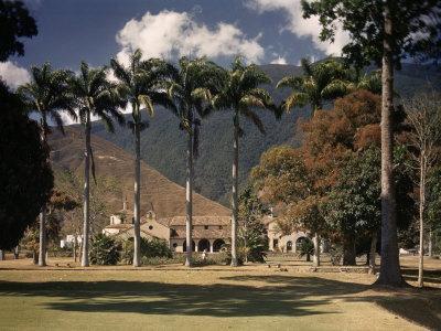 Palm Trees Line the Caracas County Club