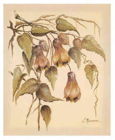 Flores Colgantes III