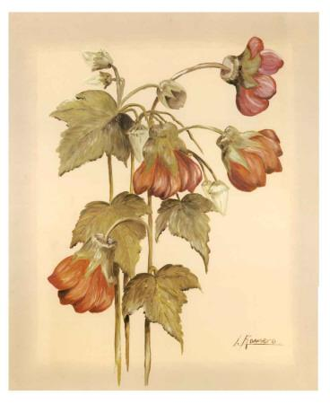 Flores Colgantes IV