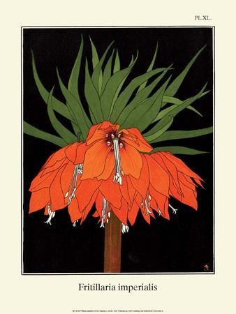 Botanical Print, Crown Imperial, 1905