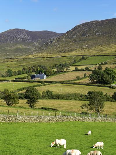 Luke's Mountain, Mourne Mountains, County Down, Ulster, Northern Ireland, United Kingdom, Europe-Jeremy Lightfoot-Photographic Print