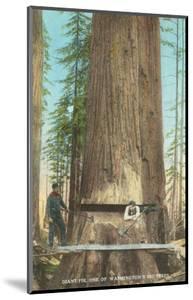 Lumberjacks Felling Fir, Washington