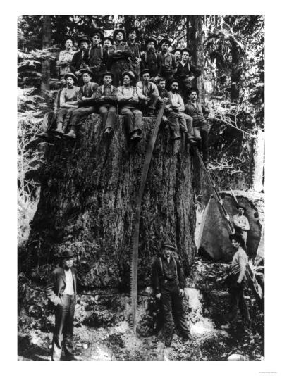 Lumberjacks prepairing Fir Tree for St. Louis World's Fair Photograph - Washington State-Lantern Press-Art Print